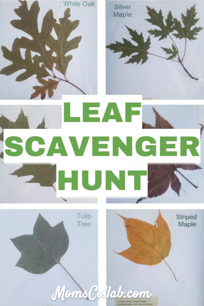 diy leaf scavenger hunt