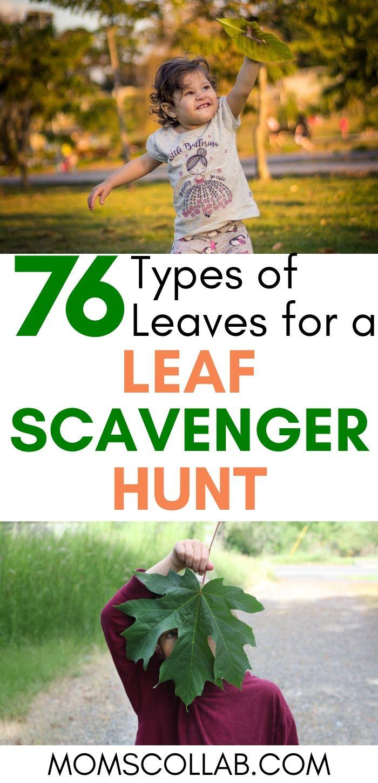 76 Types of Leaves for a Leaf Scavenger Hunt