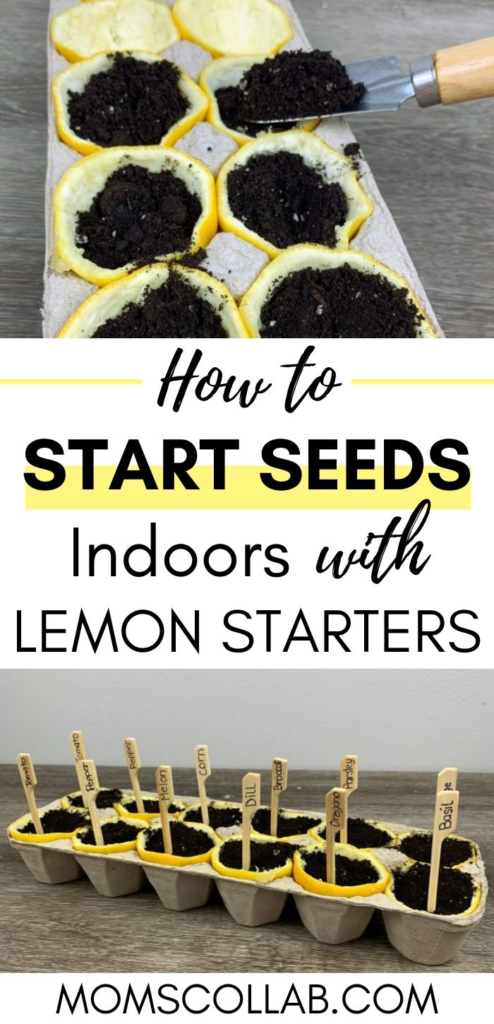 How to Start Seeds Indoors with Lemon Starters